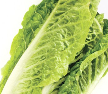 Lettuce Cos on sale. Delivered in Melbourne