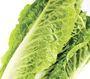 Lettuce Cos delivered in Melbourne