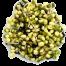 Alfalfa Mung delivered in Melbourne