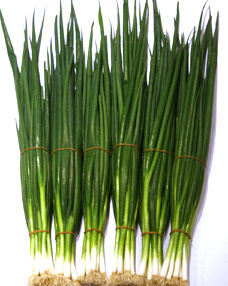 Spring Onions  delivered in Melbourne