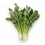 CHICORY delivered in Melbourne